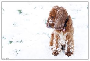 Sid in the Snow by neolestat