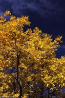 Fall Color by worldtravel04