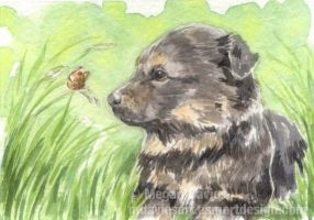Blue meets Brown ACEO by Pannya
