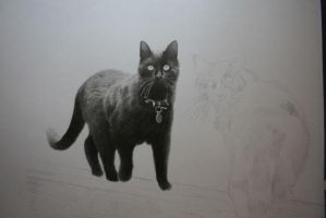 WIp 04 Cats by NorthumbrianArtist