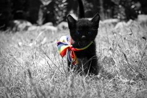 Gay Pride Kitten. by PhotograpgyAccount