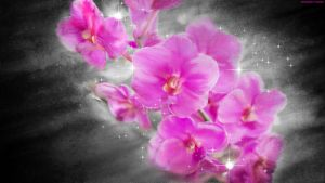 Painted Orchids by StarwaltDesign