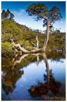 Tasmania, Cradle tree by SebastianFunkeKupper