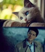 Cas like a cat by MrPotter6