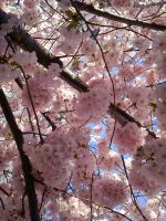 Blossom by etiennia