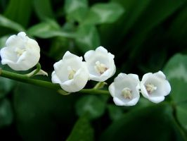 Lily of the Valley 1 by Panda-Princess131