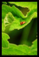 Filthy Dirty Ladybird Action by alyn