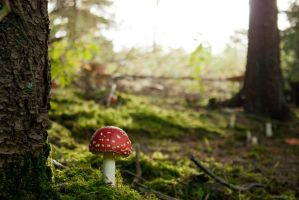 Fliegenpilz - Fly agaric by Jantiff-Stocks