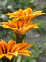 Fire flower. by MariaSemelevich