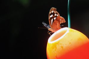 Butterfly Pitstop by MyReasonInLife