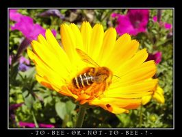 To Bee Or Not To Bee? by TheWojo