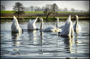 Swan Lake by neith13