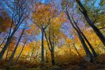 Last colors of autumn by ivancoric