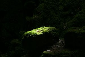 Puzzlewood 02 Stock by lokinststock