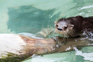 Otter by deliquescing