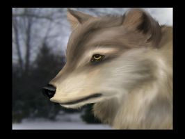 Snow Wolf by mordrelupis