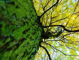 up the tree by IamNasher