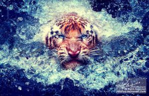 Tiger in water by RafaRod