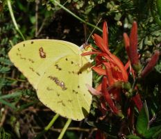 ...Cloudless..Sulphur by duggiehoo