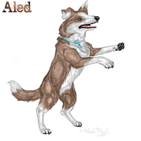 Aled -prize 4 PatchyPaws- by Miahii