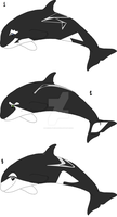 Orca Adopts 15 Points Each Or Art Trade OPEN by Grizzly-Cub