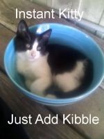 Instant Kitty In A Bowl by AngelTigress03