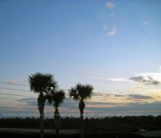 Palm Trees and Powerlines 0747 by anubis281