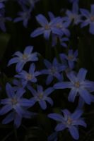 Blue Flowers by SkyStockProvider