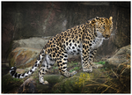 King Amur by MonsterBrand