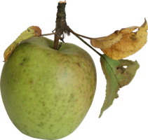 little apple with leaves precut stock png by Nexu4