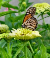 butterfly01 by Holy-Win