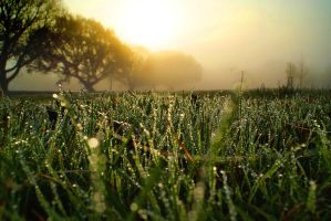 Grass in Kent by janvanepen