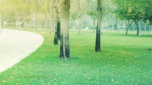 At the park by praveen3d