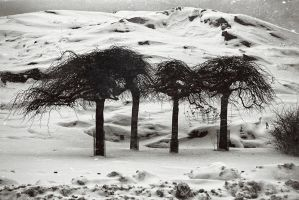ents by almaclone