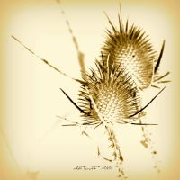 August is ocher-sepia 14 by martaraff