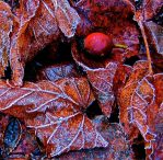 Autumn Frosts by FalseMaria