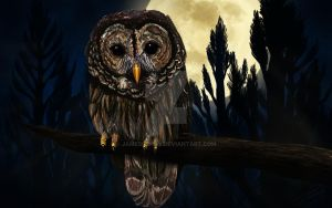 Baby Owl by JamesSchay