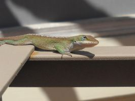 Green Anole 3 by Angelwolf778