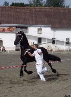 Frieasian horse show II. by Ennete