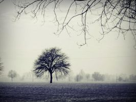 solitary by Laysa