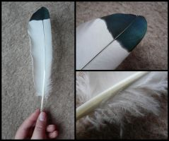 African Sacred Ibis Feather by CabinetCuriosities
