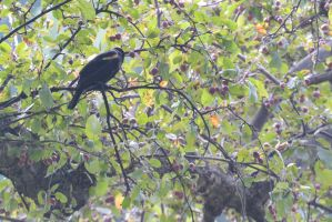 Bird In the Cherry Tree by Miss-Tbones