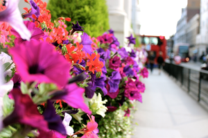 Flowers of London by Evenio