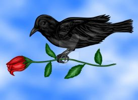 Raven and the rose by sallygilroy
