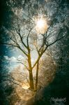 Light and Leaves by mauthbaux