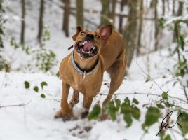 Motte is running in the snow by Eschiggs