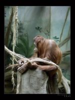 Life in Zoo 27 by firework