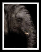 Photo - Elephant by emailandthings