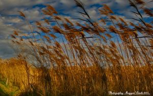The last ray of sunshine. HDR. by magyarilaszlo