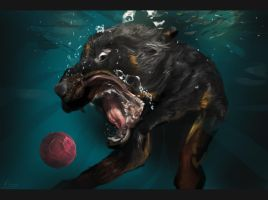 Dog in the water study by bejzar